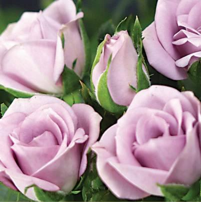 Roses Forever® Zürich™