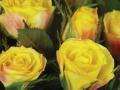 Roses Forever® Lipari™