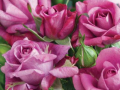 Roses Forever® Portus Cale™