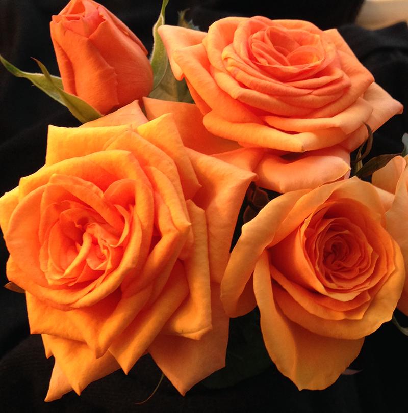 Roses Forever® Maasland Gold™