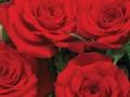 Romantic Date™
