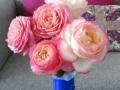 Viking Roses®