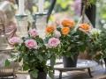 Roses Forever® 9 cm