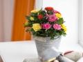 Roses Forever® mix 10 cm