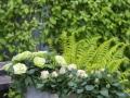 Infinity® Evergreen™