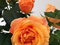 Roses Forever® Malta™