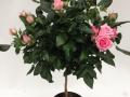 Roses Forever® Trento™