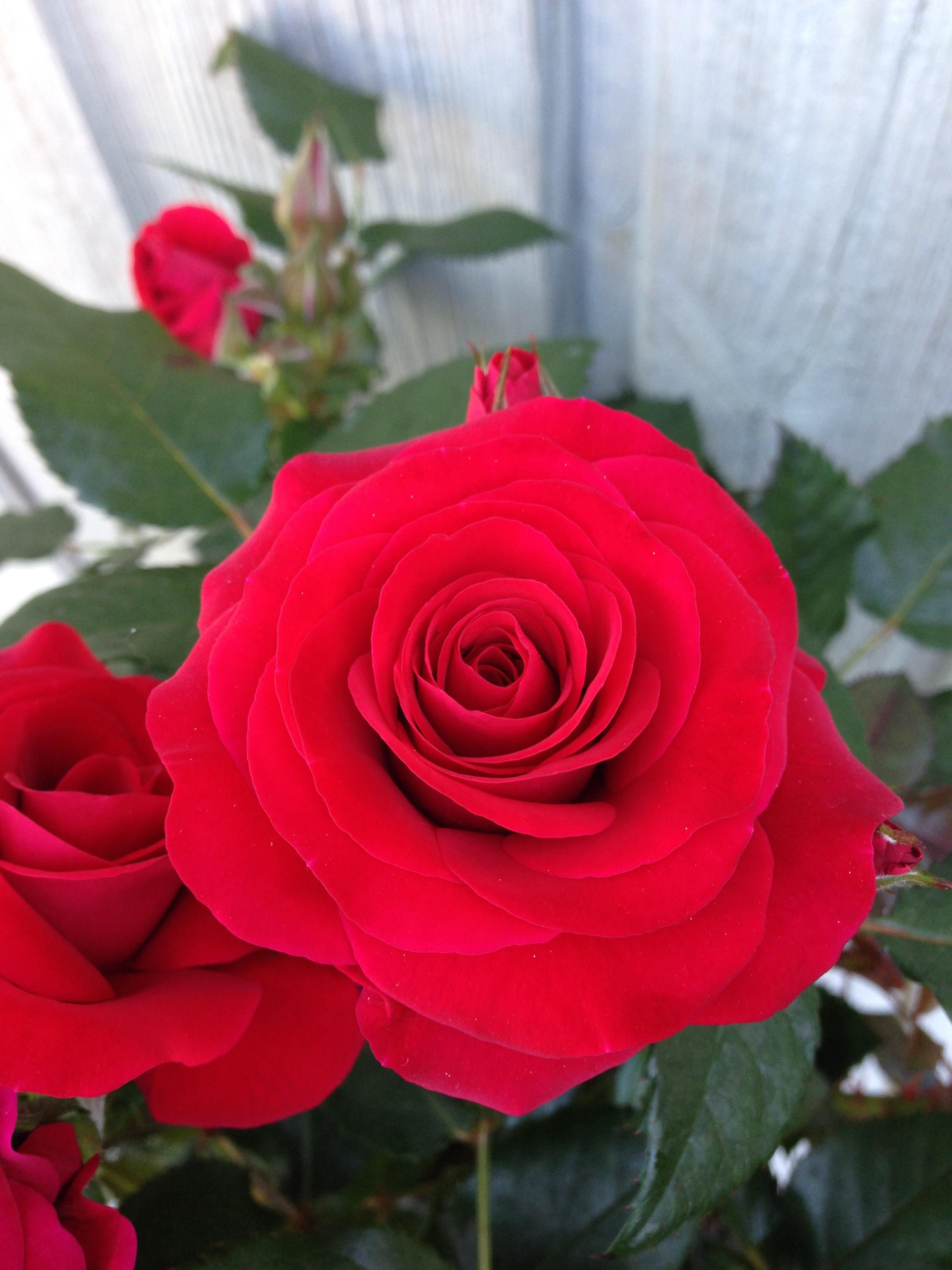 Sweet Love of Mine 2