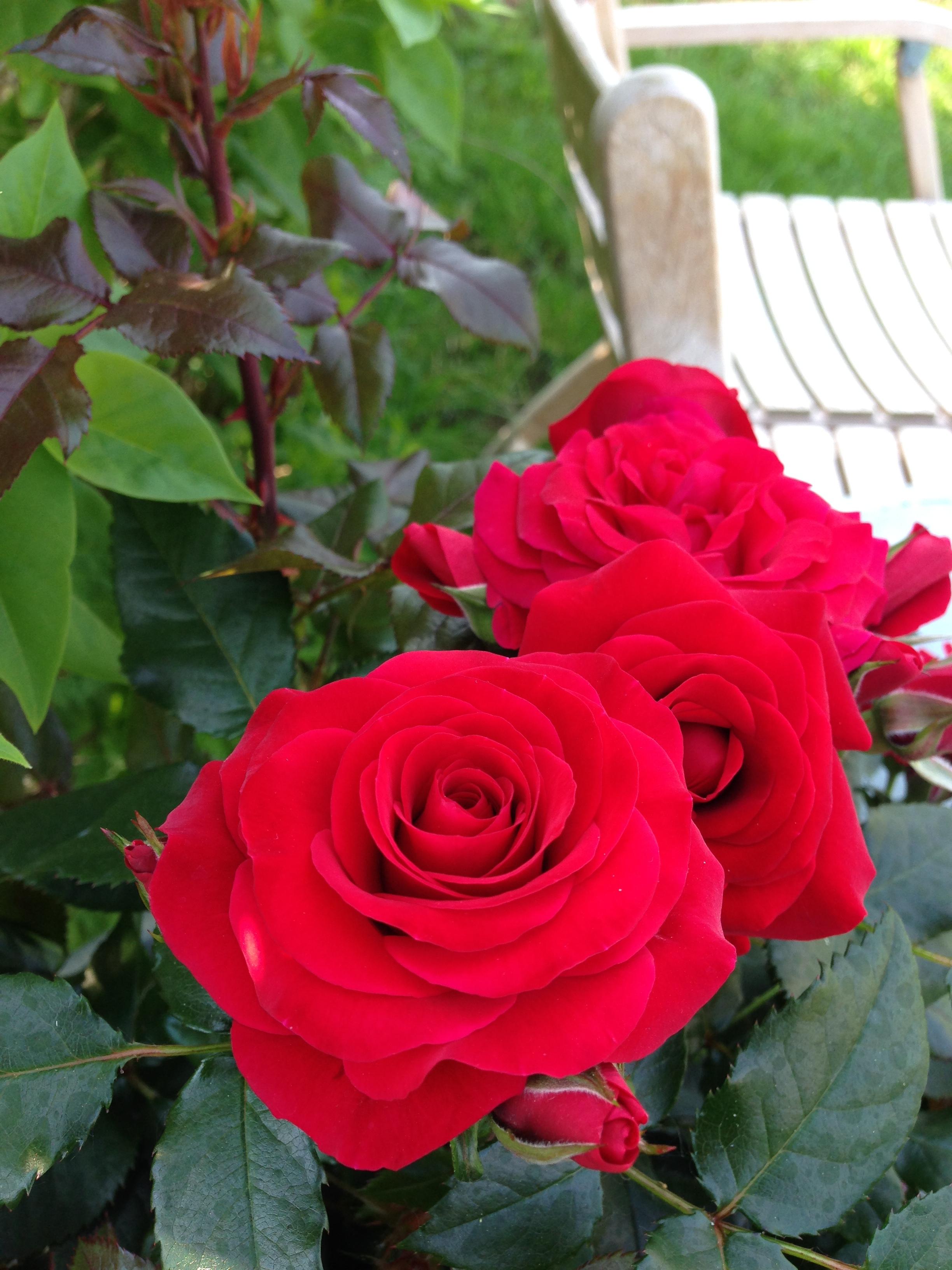 Sweet Love of Mine 5