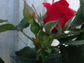 Sweet Love of Mine 4