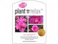 Plant'n'relax_I am grateful_med guld medalje