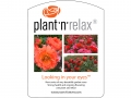 Plant'n'Relax - Looking in your eyes