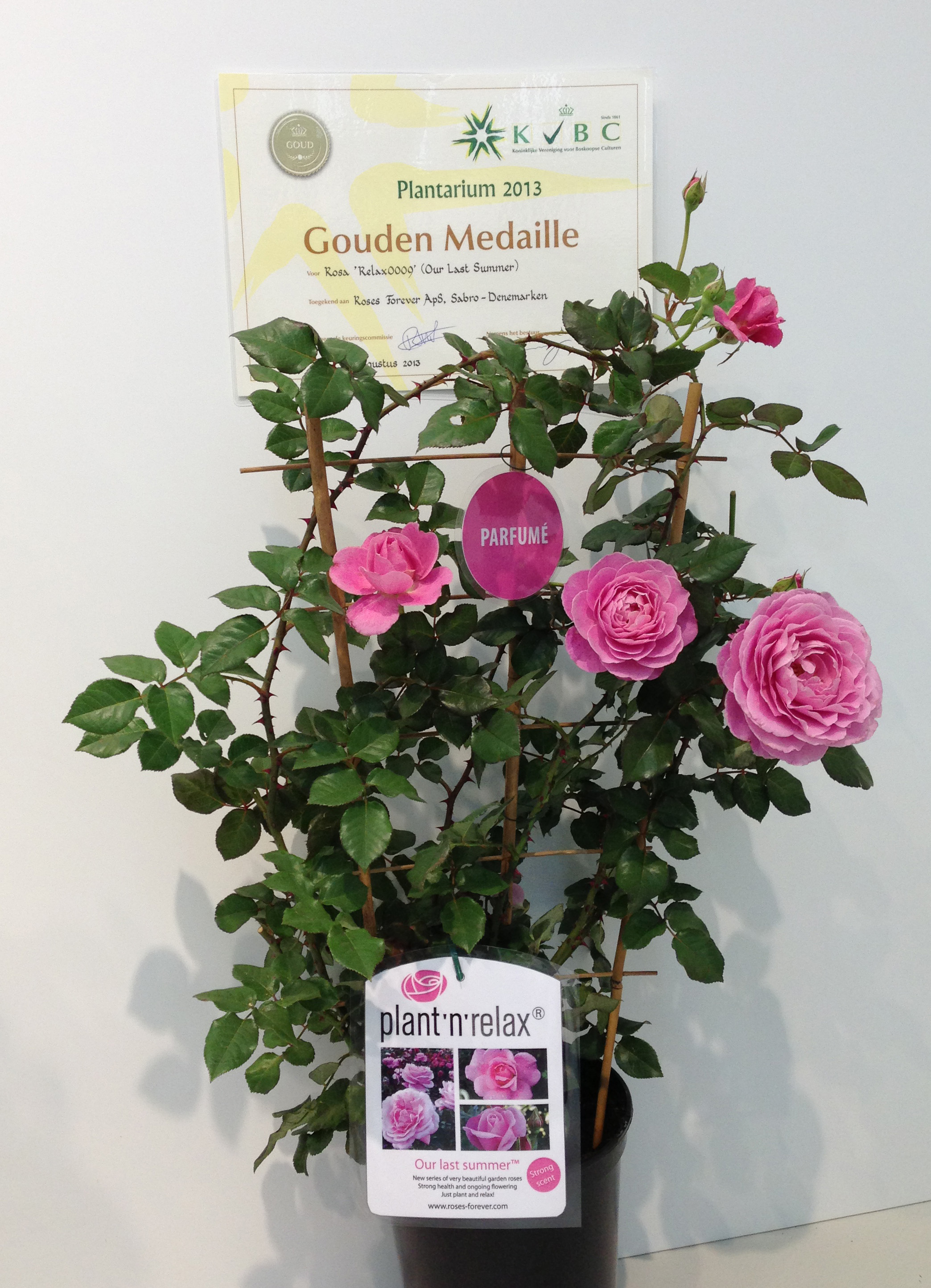 Plantarium, Boskoop, Holland, 2013 - Gold medal