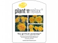 Plant'n'Relax - The girl from yesterday