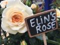 Elinsrose-navngivning2