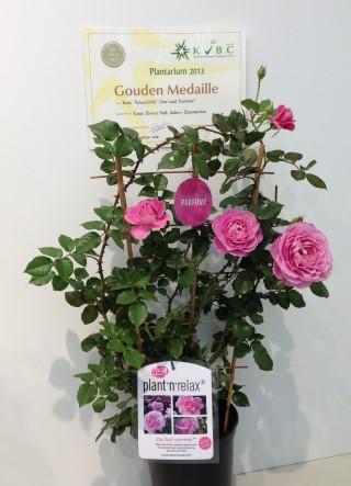 Gold-medal-Plantarium-2013 (Mobile)