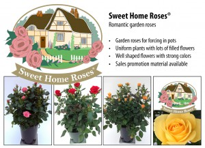 Sweet Home Roses_IPM