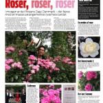 Rosens Dag i Ekstra Bladet