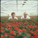 1988 - Rosa and Harley Eskelund in the middle of their new greenhouse nursery with effective production of miniroses
