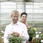Rosa and Harley Eskelund in the greenhouse, selecting new Roses Forever varieties for production