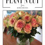 Plant'n'cut label