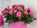 Roses Forever® Carlton™