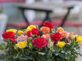 Roses Forever® mix 1.jpg