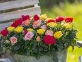 Roses Forever® mix 3.jpg