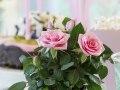 Roses Forever® party 3.jpg