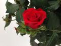 Sweet Love of Mine 1
