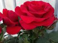 Sweet Love of Mine 3
